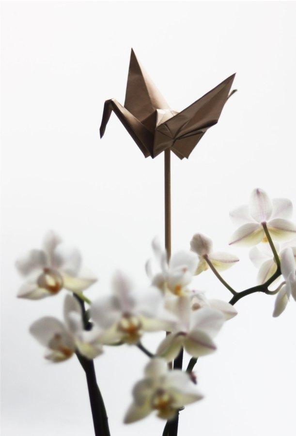 fugl og orkidé